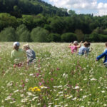 Marvellous Meadows in the Wye Valley