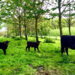 Agroforestry from a farmer's point of view – new guidance and local research project